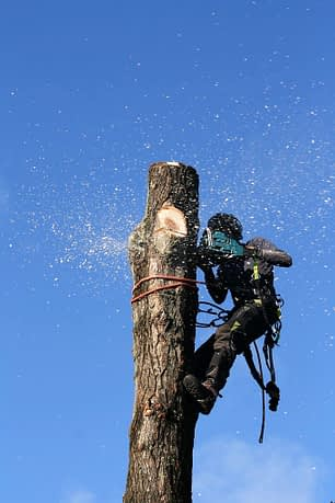 tree surgeon using a chainsaw to remove a section of timber from a tree