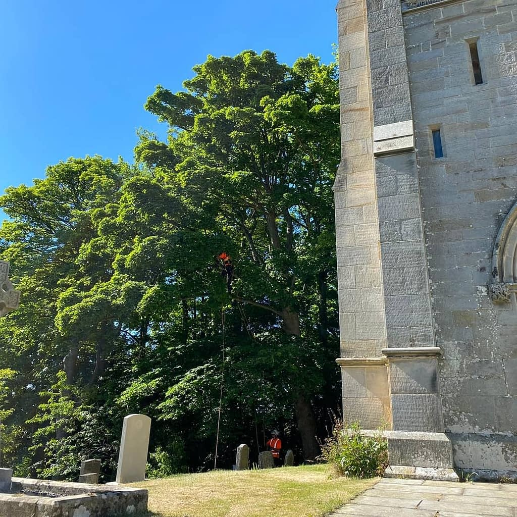 Tree climber positioning rigging lines to ensure the crown lift was carried out without risk to the grave stones below.