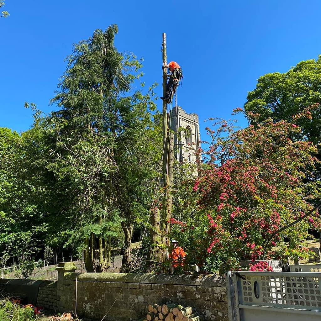 Rigging being used during the tree removal to ensure no damage to objects below.